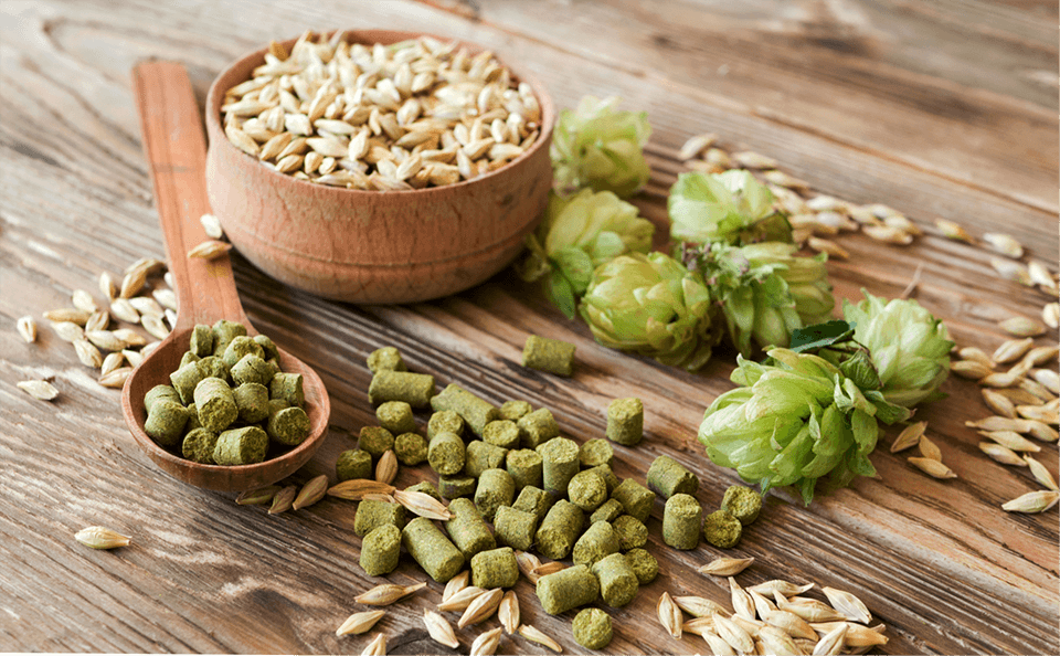 La production d'orge et de houblon